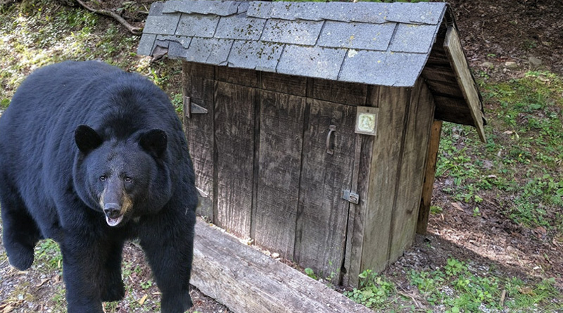 Bear Proof Trash Enclosures in Vermont